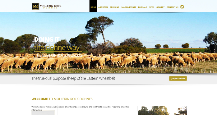 dohne sheep australia