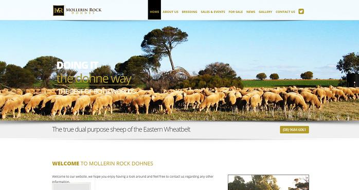 dohne sheep australia