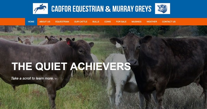 murray grey cattle stud australia