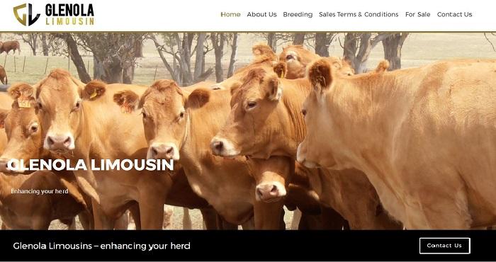Limousin Cattle Australia